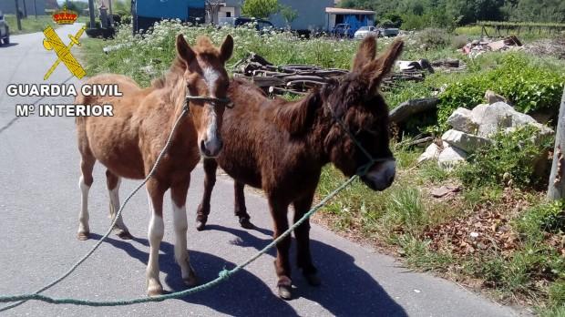 burro y potro padrón